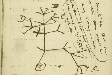 Charles Darwin's sketch